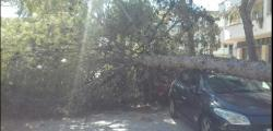 Winds of 145 km / h. cause fall of trees in Salou